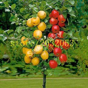 100 graines de pommier pommier nain bonsaïs graines de fruits MINI pour la plantation de jardin à la maison envoyer de grandes graines de fraises comme cadeau de la marque SVI image 0 produit