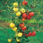 100 graines de pommier pommier nain bonsaïs graines de fruits MINI pour la plantation de jardin à la maison envoyer de grandes graines de fraises comme cadeau de la marque SVI image 1 produit