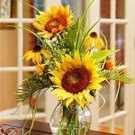 100pcs / mini sac de graines de tournesol hauteur série graines de tournesol de tournesol nain 40cm Graines de fleurs plantes pour le jardin à la maison de la marque SVI image 2 produit