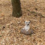1PLUS Statue de jardin suricate en la construction en résine/Polyrésine, Figurine pour le jardin/extérieur de Domaine de la marque 1PLUS image 3 produit