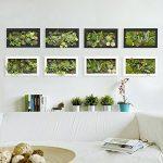 3D Fleurs Artificielles Boule Support mural Cactus Mousse sur la pierre feuilles vert herbe Fougères avec cadre forme vase Décoration, 20x 35cm de la marque Artificial Flower-Wall Hanger image 1 produit