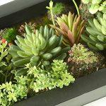 3D Fleurs Artificielles Support mural Cactus Mousse sur la pierre feuilles vert herbe Fleur Rose avec cadre forme vase, 20x 35cm de la marque Artificial Flower-Wall Hanger image 4 produit