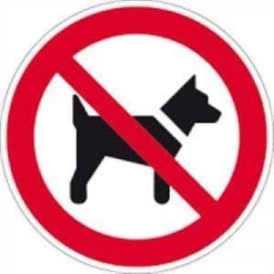 chien interdit TOP 0 image 0 produit