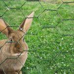 clôture de jardin TOP 7 image 4 produit