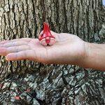 """""""Daisy"""" le Bébé Nain avec sa belle couronne de marguerites et son chapeau pointu - Un mini nain pour votre Jardin Féérique de la marque GlitZGlam image 3 produit"""
