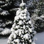 exclusive artificiel sapin de noel arbre de noel 240 cm de la marque RS Trade image 4 produit