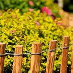 Floranica® - Clôture en bois de noisetier imprégné, clôture de jardin, longueur 5 m, Distance Piquets:3 à 4 cm, Hauteur:50 cm de la marque Pemicont image 3 produit