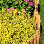 Floranica® - Clôture en bois de noisetier imprégné, clôture de jardin, longueur 5 m, Distance Piquets:3 à 4 cm, Hauteur:50 cm de la marque Pemicont image 4 produit