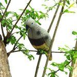 Latinaric Pigeon D'appât Pour Chasse Décoration Du Jardin Gris Multicolore de la marque Latinaric image 4 produit