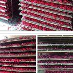 TooGet Séché naturel réel rouge pétales de rose organique séché fleurs en gros meilleur pour la décoration de fête de mariage, bain, lavage de corps, lavage de pieds, thé, cuisson, pot-pourri, artisanat - 60g de la marque TooGet image 4 produit