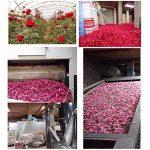TooGet Séché naturel réel rouge pétales de rose organique séché fleurs en gros meilleur pour la décoration de fête de mariage, bain, lavage de corps, lavage de pieds, thé, cuisson, pot-pourri, artisanat - 60g de la marque TooGet image 3 produit
